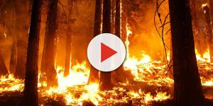 Incêndio forestal em Esposende com origem num trator