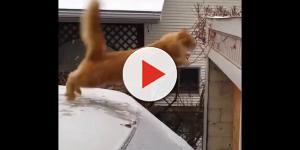 Vídeo: A melhor compilação de fails gatos