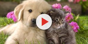 Vídeo: Animais