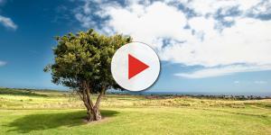 Video: Ambiente, la natura e l'intervento umano