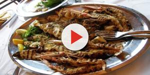 Video: Mangia frutti di mare avariati, vescica rotta dopo conati di vomito