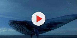 Alicidor brasileiro do Baleia Azul é preso e sua identidade é revelada