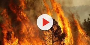VIDEO: Incendi Italia, il nostro paese brucia: in atto un piano criminale