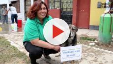 Vídeo: Programas de conservación de la naturaleza: Unas vacaciones diferentes