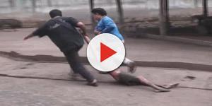 Turista provoca urso, é atacado e final é surpreendente