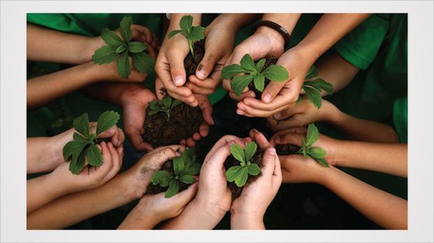Dicas de produtos naturais para fazer uma limpeza sustentável