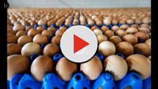 Video: Allarme uova al Fipronil: sono arrivate anche in Italia?