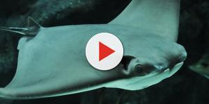 Video: Nel Salento c'è 'lu diaulu de mare': è enorme, il video mozzafiato