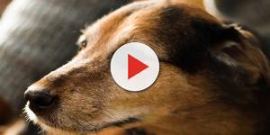 Confessa rapporti intimi con un labrador: condannato a tre anni e due mesi