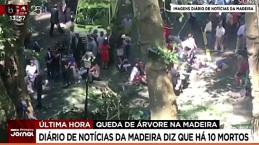 Fatal desenlace en Madeira tras la caída de un árbol