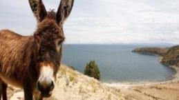15 jovens foram hospitalizados após envolvimento com burro