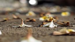 Novos ataques com facas deixam dois mortos na Finlândia e oito feridos na Rússia