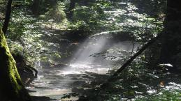Mulher desaparecida é encontrada após sobreviver a quase um mês na selva; veja