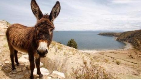 15 menores vão parar em hospital após estuprar burro infectado com raiva