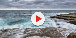 Tubarão ataca em praia movimentada e crianças ficam em pânico, assista ao vídeo