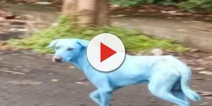 Video: A Mumbai i cani diventano blu per colpa dell'inquinamento