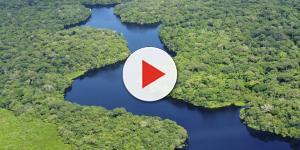 Corrida do ouro: Michel Temer quer desmatar reserva na Amazônia para exploração
