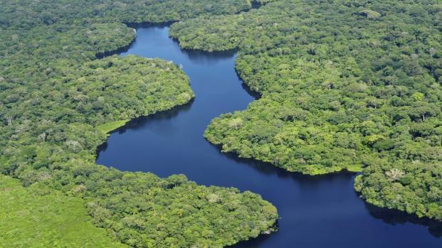 Cura do HIV e do câncer pode ter sido encontrada em flora brasileira