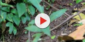 Las heces de las hormigas sirven a las plantas como fertilizantes