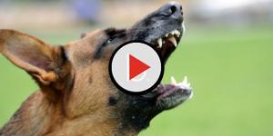 I cani dei vicini abbaiano, il giudice: 'Tagliategli le corde vocali'