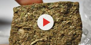 Vídeo horripilante mostra efeito zumbi causado pela maconha sintética; assista