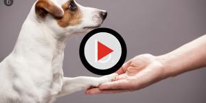 Tudo o que você não sabia sobre  o quinto dedo do seu cão