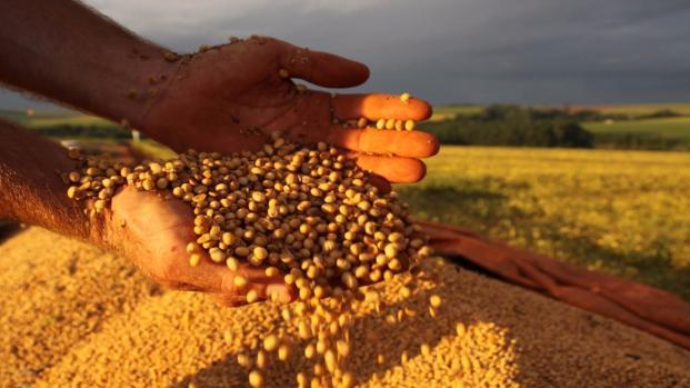 Produção de grãos cai 0,5% em agosto, mesmo com alto volume de soja e milho