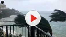 Video: L'uragano ha gettato una strana creatura sulla costa del Texas