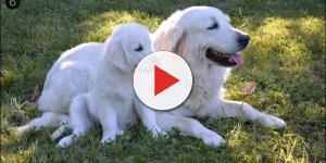 Estudo nos EUA comprova autoconsciência em cães