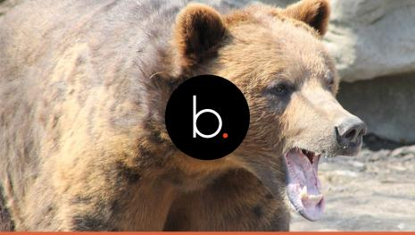 Assistam Detalhe no corpo do homem devorado por ursos é assustador