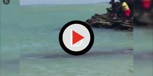 Especialistas confirmam que animal perto de banhistas em vídeo é um tubarão