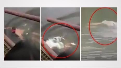 Homem diz que é imune a crocodilos ferozes, mas vídeo mostra ele devorado