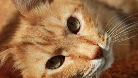 Gato misterioso surge durante funeral e intriga familiares