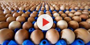 Uova contaminate ritirate in Sardegna