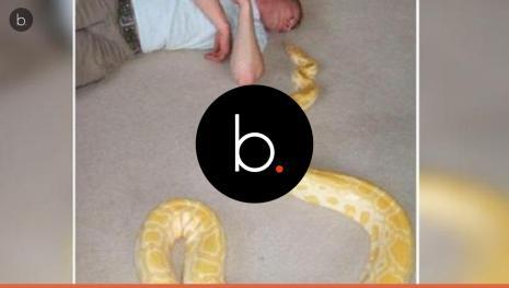 Reino Unido: Dono de cobra é encontrado morto ao seu lado