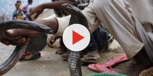 Homem se filma morrendo depois de ser mordido por cobra e transmite tudo ao vivo