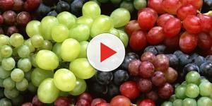 Dieta dell'uva: come dimagrire grazie ai polifenoli
