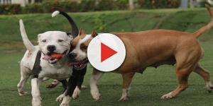 Bimbo di 4 anni sbranato dai suoi cani mentre gioca in cortile