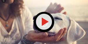 Se seu cão realmente o ama você vai notar esses 7 sinais