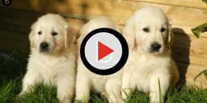 """L'associazione animalista """"Il grande sogno"""" denuncia maltrattamento di cani"""