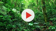 ¿Qué hay detrás de la venta de selvas y bosques mexicanos?
