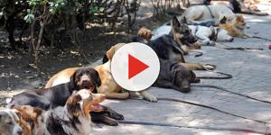 700 toneladas de heces caninas contaminan a diario la CDMX