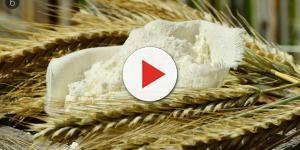 Farina di mais con alti livelli di fumonisine