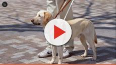 VIDEO: Non vedente cacciata dalla chiesa da suora perché insieme al cane guida