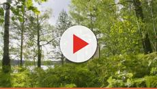 Suecia presenta las cabañas de vidrio que en 72 horas te reducen el estrés