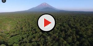 video: Aokigahara: ecco la foresta dei suicidi