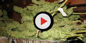 Gli effetti collaterali sulla marijuana