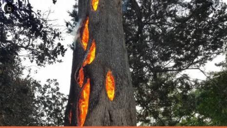 Até nas piores tragédias, a natureza pode surpreender