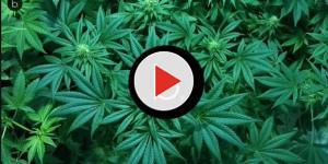Marijuana leggera: in vendita anche dal benzinaio