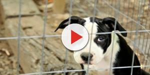 Orrore a Belgrado: bordelli offrono sesso con gli animali